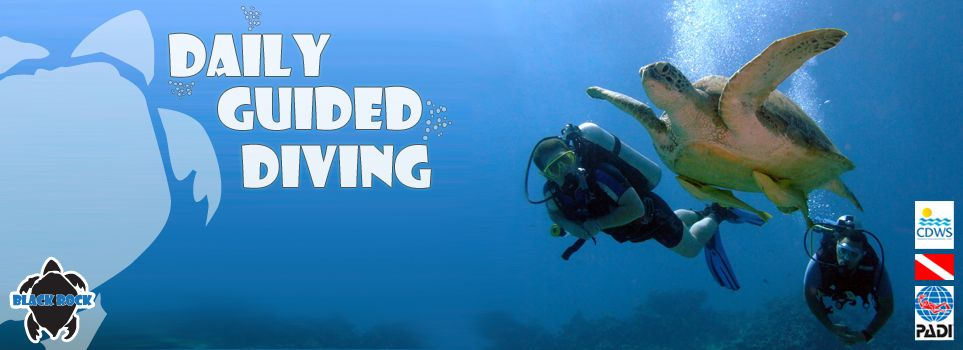 Daily Guided Diving