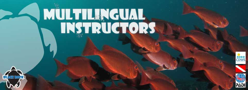 Multilingual Instructors